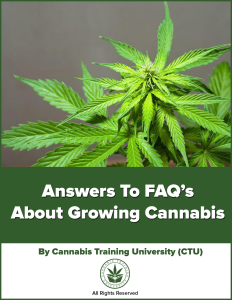 Answers To FAQ's About Growing Cannabis