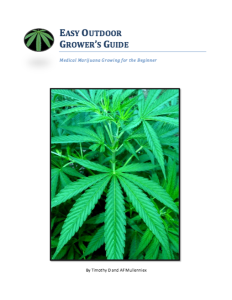 Easy Cannabis Outdoor Growing Guide