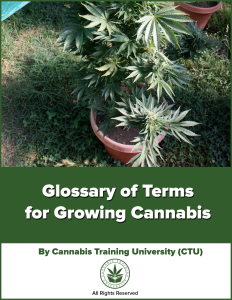 Glossary of Terms for Growing Cannabis