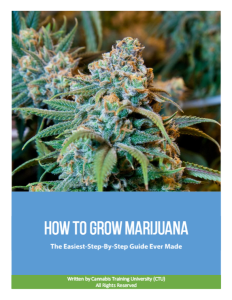 How to Grow Marijuana: The Easiest Step-By-Step Guide Ever Made