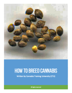 How to Breed Cannabis